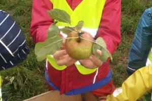 Kita aus Karlsruhe sammelt Früchte