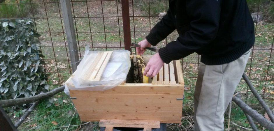 Neues aus dem Bienenstock der Kita Grashüpfer