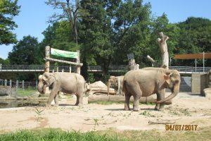 Elefanten im Karlsruher Zoo