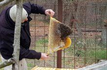 Summ, summ, summ ….wie geht es wohl im Winter den Bienen?