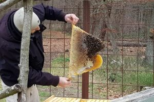 Imker kontrolliert den Bienenstock in der Kita