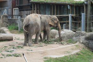 Elefanten im Karlsruhe Zoo