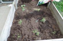 Gruppenprojekt: Gemüsezwerge