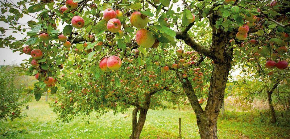 """Wir sind Baumpate – Kita """"Zur Dorfwies"""" übernimmt Baumpatenschaft"""