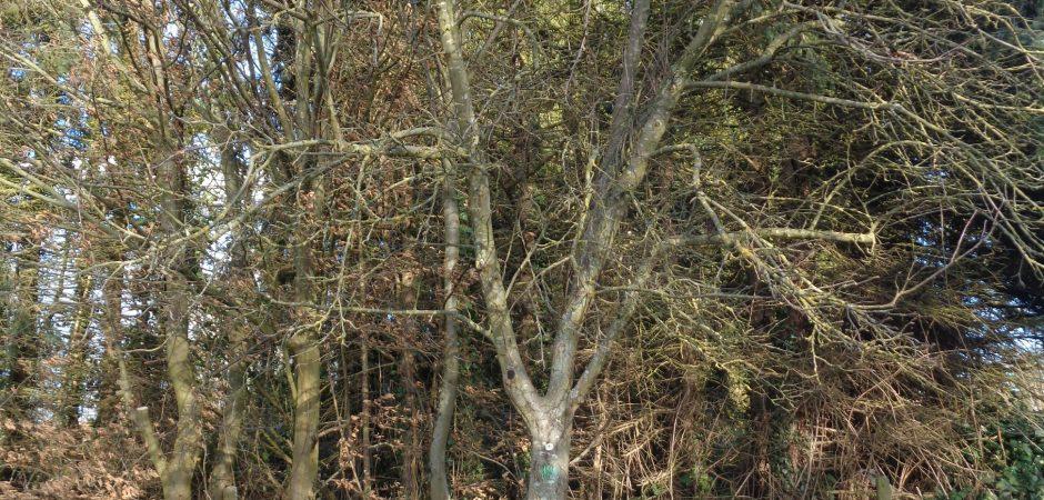 Kinder sammeln Kastanien vor einem Baum