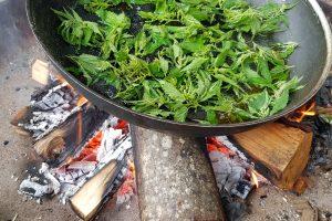 Brennnesselblätter in Pfanne auf Lagerfeuer